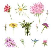 Set of garden flowers, sketch for your design — Stock Vector