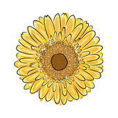 Sunflower sketch for your design — Stock Vector