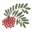 Rowan branch with berries for your design — Stock Vector