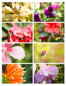 Design cards with floral collection — Stock Photo