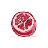 Sketch of pomegranate for your design — Stock Vector
