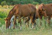 Many horses on meadow — Stock Photo