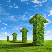 Setas de grama verde — Foto Stock