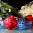 Christmas decoration — Stock Photo #16032103