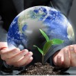 Stock Photo: Green plant on earth