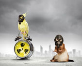 Ferret and parrot in gas masks — Stock Photo
