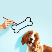 Hungry spaniel dog — Stock Photo