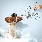 Funny spaniel dog — Stock Photo