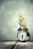 Parrot sitting on alarm clock — Stock Photo