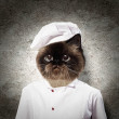 Funny fluffy cat cook in a robe — Stock Photo