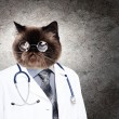 Funny fluffy cat doctor in a robe — Stock Photo