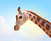 Muzzle fun spotted giraffe — Stock Photo