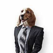 Funny portrait of a dog in a suit — Stock Photo