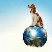Dog with the Earth. — Stock Photo