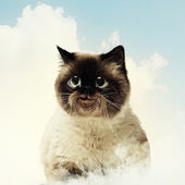 Funny fluffy cat against color background — Stock Photo