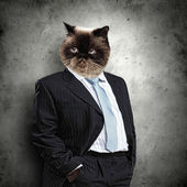 Funny fluffy cat in a business suit — Stock Photo