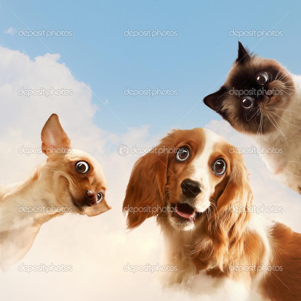 Tre animali domestici foto stock sergeynivens 26421143 for Disegna i piani domestici online
