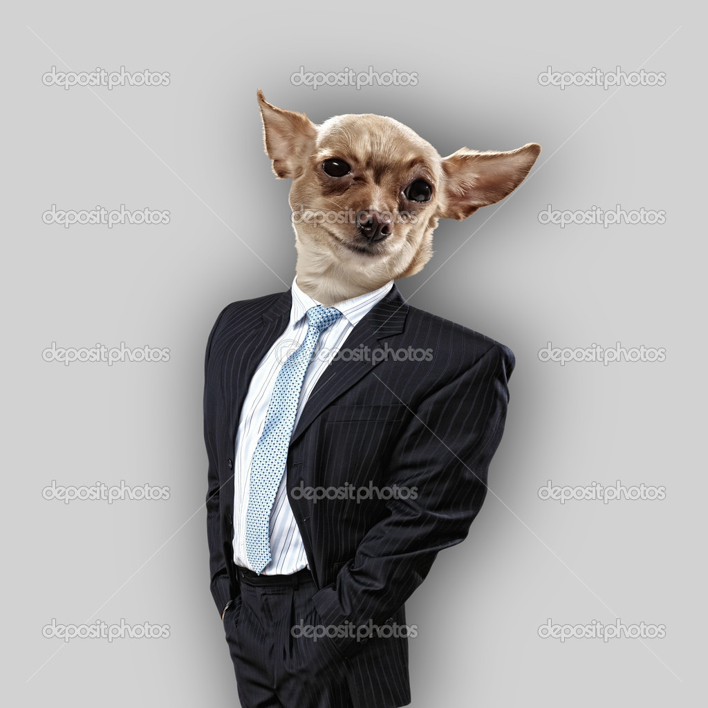 [Obrazek: depositphotos_26421481-Funny-portrait-of-a-dog.jpg]