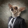 Funny portrait of a dog in a suit — Stock Photo #29091951