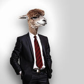 Portrait of a funny camel in a business suit — Stock Photo