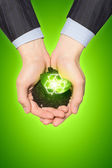Sprout in hands — Stock Photo