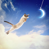 Cat catching moon — Stockfoto