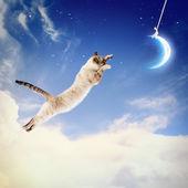 Lua captura de gato — Foto Stock