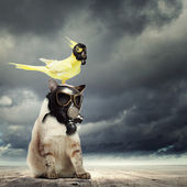 Cat and parrot in gas masks — Stock Photo