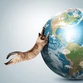 Siamese cat playing — Stock Photo
