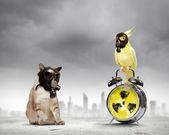 Chat et perroquet en masques à gaz — Photo
