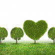 Conceptual image of green plant shaped like heart — Stock Photo