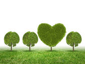 Konceptuell bild av gröna växten formad som hjärtat — Stockfoto