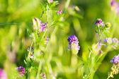 Flowers in field — Стоковое фото