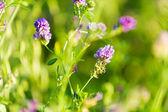 Flowers in field — Stockfoto