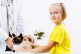 Cat at vet clinic — Stock Photo