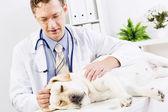 Dog at vet clinic — Stock Photo