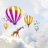 Flying giraffe — Foto Stock