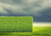 Greenery concept — Stock Photo