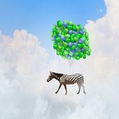 Flying zebra — Stock Photo