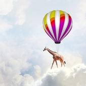 Uçan zürafa — Stok fotoğraf