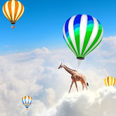 Flying giraffe — Stock Photo