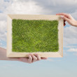 Frame with grass — Stock Photo #50493091