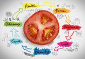 Red tomato with sketches — Stockfoto