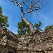 Landscape with giant trees in the temple of Ta Prohm in Cambodia — Stock Photo
