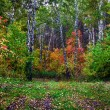 Stock Photo: autumn forest