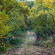 Autumn forest — Stock Photo #13682143