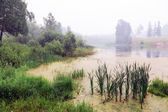Fog over the lake — Stock Photo