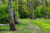 Spring forest — Стоковое фото