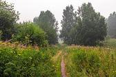 Flowering meadow — Stock Photo