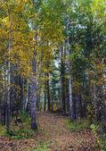 Herbstwald — Stockfoto